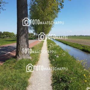 pad in de natuur